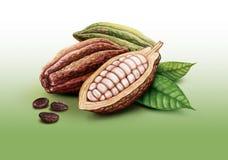 Kakao strąki, kakaowe fasole i liście, Zdjęcie Stock