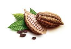 Kakao strąki, kakaowe fasole i liście, Zdjęcia Royalty Free