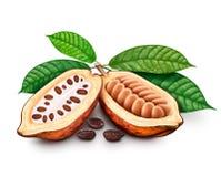 Kakao strąki, kakaowe fasole i liście, Obrazy Royalty Free