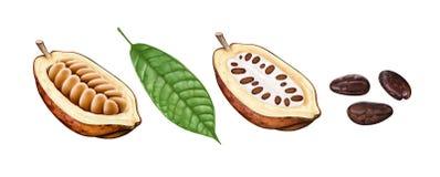 Kakao strąki, kakaowe fasole i liście, Obraz Stock