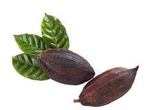 kakao strąki z Kakaowym liściem zdjęcia royalty free