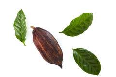 kakao strąki z Kakaowym liściem obraz stock