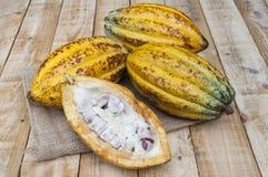 Kakao ziarna oferta obrazy royalty free