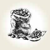 Kakaobönapåse vektor illustrationer