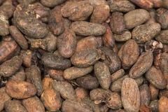 Kakaobönor Royaltyfri Fotografi