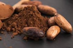 Kakaobönor och kakaopulver i sked Royaltyfri Foto