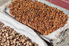 Kakaobönor som torkar i solen Fotografering för Bildbyråer