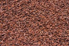 Kakaobohnen Lizenzfreies Stockfoto