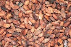 Kakaobohnen Lizenzfreie Stockfotos