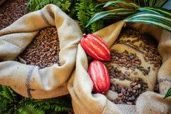 Kakaobohnen und Früchte Stockfotografie
