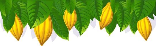 Kakaofröskida och blad - övrestångvektorn Arkivfoton
