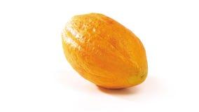 Kakaofrucht Stockbild