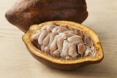 Kakaofrucht und rohe Kakaobohnen in der Hülse Lizenzfreies Stockfoto