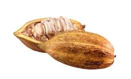 kakaofrukt Arkivbild