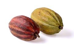 Kakaofrukter Arkivbild