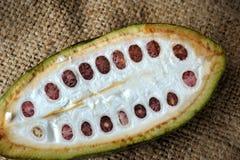 Kakaofrukter Arkivfoto