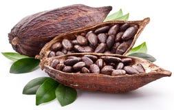 Kakaohülse Stockfoto