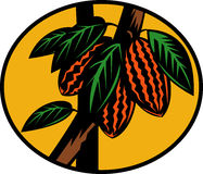 kakaokakaofruktträd Royaltyfria Bilder