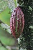 Kakaopudding Arkivfoto