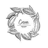 Kakaoram Mall för vektorsuperfoodteckning Frukt blad och vektor illustrationer
