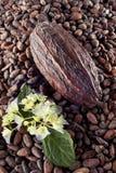 Kakaowa fasola na fasoli tle Fotografia Stock