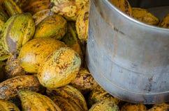 Kakaowa owoc i kakao w wiadrze Obraz Royalty Free