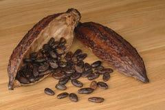 Kakaowa owoc z fasolami zdjęcia royalty free