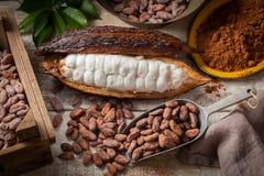 Kakaowe fasole i strąk zdjęcie royalty free