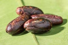 Kakaowe fasole strugali na zielonym liściu, w górę zdjęcia stock