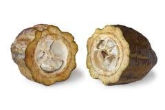 Kakaowe fasole w cacao strąku fotografia royalty free