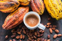 Kakaowe Owocowe i Kakaowe fasole Z filiżanką gorący kakao obrazy royalty free