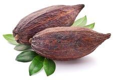 Kakaowy strąk zdjęcie stock