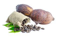 Kakaowy strąk, Kakaowe fasole, kakaowy proszek na białym tle Zdjęcia Stock