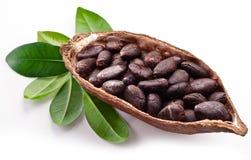 Kakaowy strąk Obrazy Stock