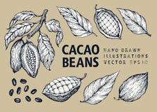 Kakaowych fasoli ilustraci wektorowy set Grawerująca rocznika stylu ilustracja Czekoladowe kakaowe fasole ilustracja wektor
