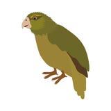 Kakapo bird icon Stock Photos