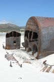 Kakapo do Shipwreck na praia do kommetjie fotos de stock