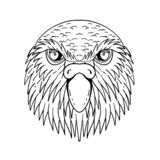 Kakapo Owl Parrot Head Drawing Black och vit stock illustrationer