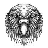 Kakapo Owl Parrot Head Tattoo. Tattoo style illustration of of head of kakapo, night parrot or owl parrot, a species of flightless, nocturnal, ground-dwelling stock illustration