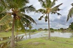 Kakativu-Morast, Sri Lanka Stockfotos
