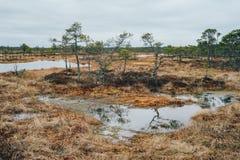 Kakerdaja bagno wczesną wiosną, Estonia Obraz Stock