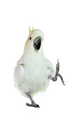 Kaketoe Royalty-vrije Stock Afbeeldingen