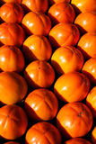 Kaki, persimmon fruits. Fresh and ripe in rows Royalty Free Stock Photography