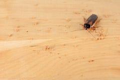 Kakkerlak in de keuken Het probleem is in het huis wegens de kakkerlakken royalty-vrije stock afbeeldingen