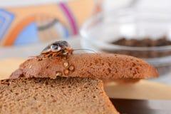 Kakkerlak in de keuken Het probleem is in het huis wegens de kakkerlakken Kakkerlak die in de keuken eten stock afbeeldingen