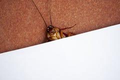 Kakkerlak en Witboek half voor presentatie royalty-vrije stock afbeelding