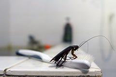 Kakkerlak op tandenborstel op achtergrond wordt geïsoleerd die Besmetting Di royalty-vrije stock fotografie