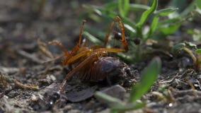 Kakkerlak versus Mieren stock footage