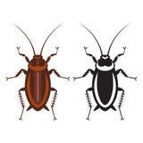 Kakkerlak in zuivere stijl Stock Foto's