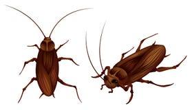 Kakkerlakken Royalty-vrije Stock Afbeelding
